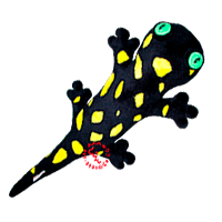Plush copy of lost salamander.